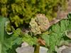 razmnozevanje-rastlin-10