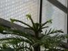 razmnozevanje-rastlin-18