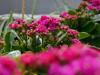 razmnozevanje-rastlin-3