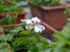 razmnozevanje-rastlin-4
