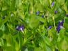 razmnozevanje-rastlin-7